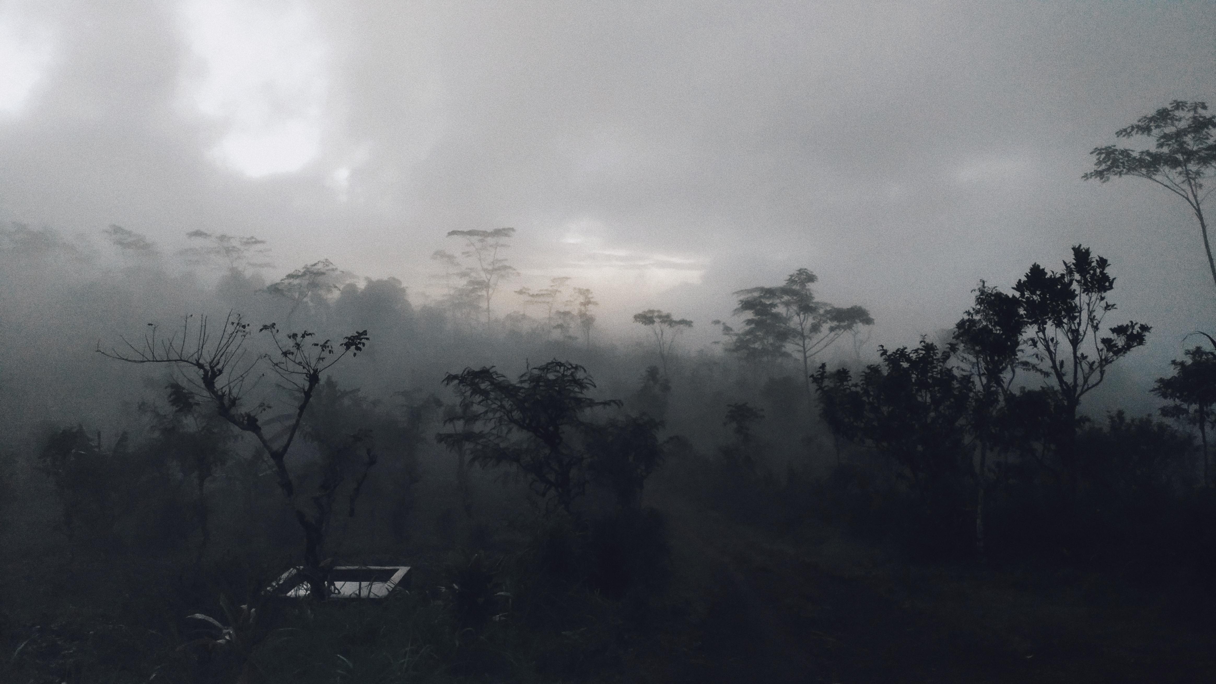 Bukit Cemara Karangasem 2
